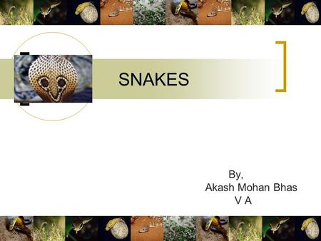 SNAKES By, Akash Mohan Bhas V A. 2 Snakes! A lot of tales are there about the many varieties of snakes scattered throughout the world. This could be because.