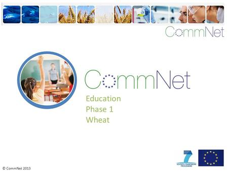 © CommNet 2013 Education Phase 1 Wheat. © CommNet 2013 Do you know what this is? Wheat Wheat is a type of grass.
