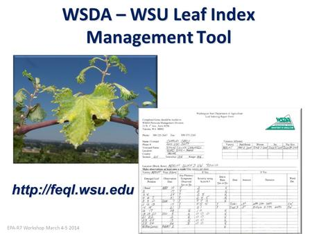 WSDA – WSU Leaf Index Management Tool Photo by Gail Amos WSDA EPA-R7 Workshop March 4-5 2014