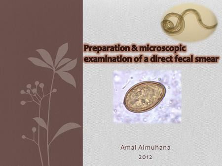 Amal Almuhana 2012. Direct fecal smears  Direct fecal smears can be used as a quick screening test to check for any intestinal parasite.