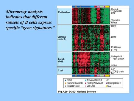 "Microarray analysis indicates that different subsets of B cells express specific ""gene signatures."""