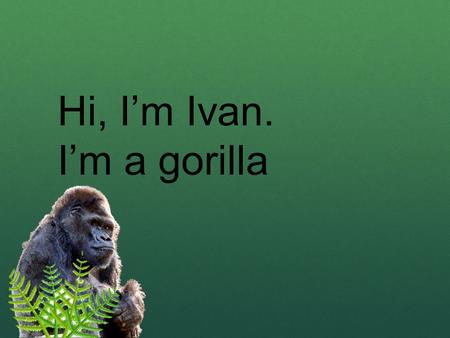 Hi, I'm Ivan. I'm a gorilla I live at the Exit 8 Big Top Mall and Video Arcade.
