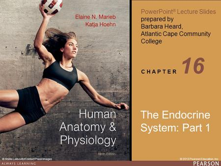 Human Anatomy & Physiology Ninth Edition PowerPoint ® Lecture Slides prepared by Barbara Heard, Atlantic Cape Community College © 2013 Pearson Education,