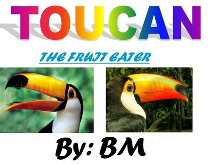 TOUCAN THE FRUIT EATER By: BM.