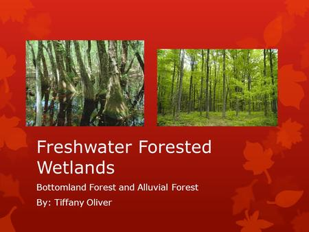 Freshwater Forested Wetlands Bottomland Forest and Alluvial Forest By: Tiffany Oliver.