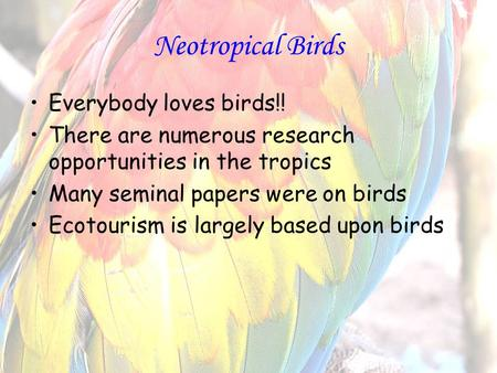 Neotropical Birds Everybody loves birds!! There are numerous research opportunities in the tropics Many seminal papers were on birds Ecotourism is largely.