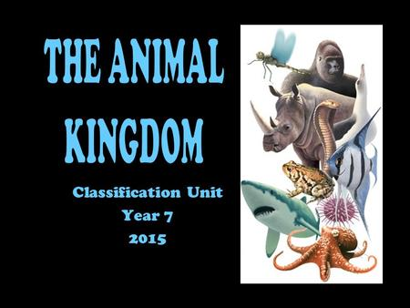 Classification Unit Year 7 2015. The Animal kingdom is split into 9 phyla It is not scientific to separate purely on the presence of absence of a backbone.