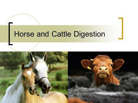 Horse and Cattle Digestion. Horse oddities Unable to vomit Lack a gallbladder Stomach  Esophageal region of stomach- nonglandular  Margo plicatus.