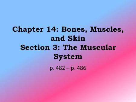 Chapter 14: Bones, Muscles, and Skin Section 3: The Muscular System