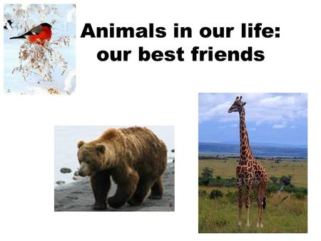 Animals in our life: our best friends