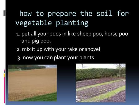 How to prepare the soil for vegetable planting 1. put all your poos in like sheep poo, horse poo and pig poo. 2. mix it up with your rake or shovel 3.