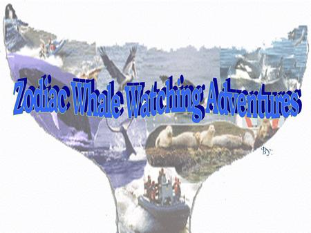"By:.  Started in 1997 by Jim Sinnott.  His partner, Al Vanderford officially joined Zodiac Adventures this year.  Located in Depoe Bay, OR – ""The Whale."