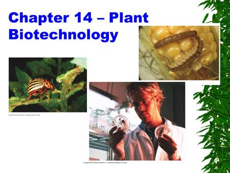 Chapter 14 – Plant Biotechnology
