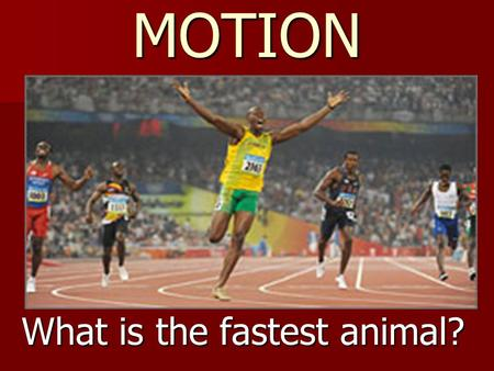 MOTION What is the fastest animal?. 180 mph (290 km/hr) What is the fastest mammal? What is the fastest mammal?