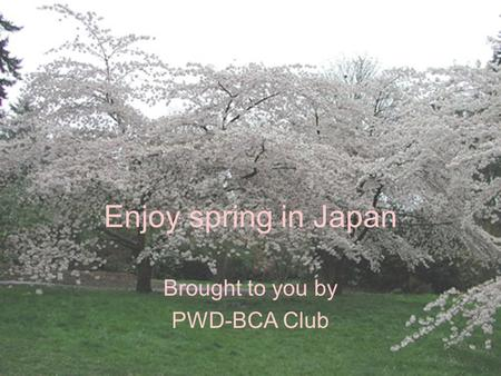 Enjoy spring in Japan Brought to you by PWD-BCA Club.