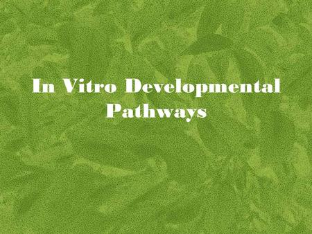 In Vitro Developmental Pathways
