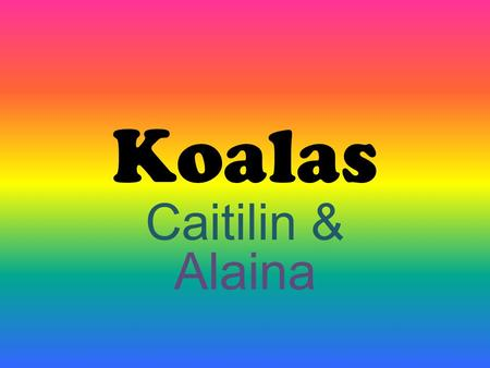 Koalas Caitilin & Alaina. What they do and communicate They are nocturnal. It means they stay up all night. They climb down the trees. Koalas are quiet.