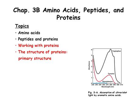 Chap. 3B Amino Acids, Peptides, and Proteins Topics Amino acids Peptides and proteins Working with proteins The structure of proteins: primary structure.