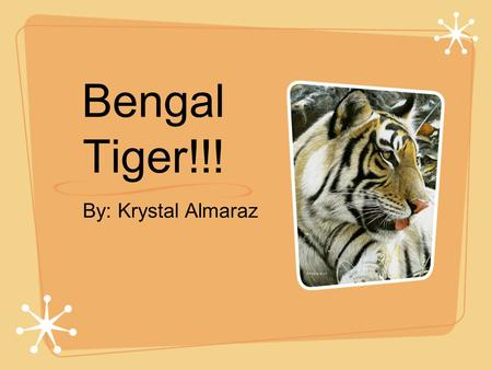 By: Krystal Almaraz Bengal Tiger!!!. Appearance!!! The Bengal Tiger is one of the largest cats in the world. The males may reach lengths of 3 meters from.