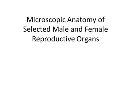 Microscopic Anatomy of Selected Male and Female Reproductive Organs