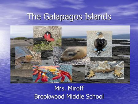 The Galapagos Islands Mrs. Miroff Brookwood Middle School.