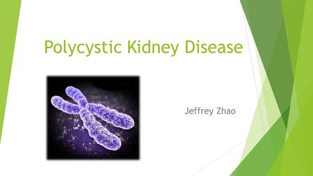 Polycystic Kidney Disease Jeffrey Zhao. Two Types  Genetic Disorder  Occurs in humans a few mammals  Around 12.5 million people worldwide  Autosomal.