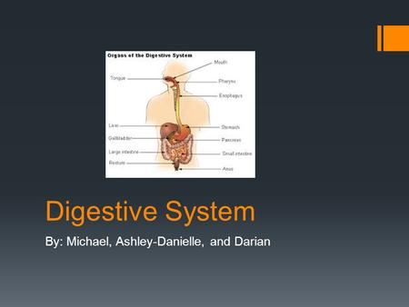 Digestive System By: Michael, Ashley-Danielle, and Darian.