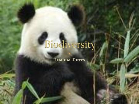Irianna Torres. An organism that is endangered is the giant panda there are around 1,500 giant pandas on earth. A female panda has around 1 or 2 cubs.