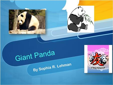Giant Panda By Sophia R. Lehman The Giant Panda has a lot of fur. It is covered with white fur, well some of the fur. The panda has black on some of.