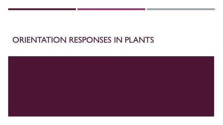 ORIENTATION RESPONSES IN PLANTS.  Plants are autotrophs – making food from photosynthesis.  Apart from reproductive organs (flowers) plant structure.
