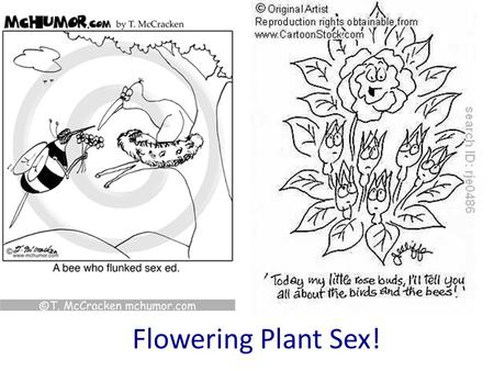 Flowering Plant Sex!. Petals Stigma Anther Filament Ovary Sepals Ovules Nectaries Style Label your diagram on your worksheet Carpel female parts Stamen.