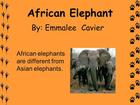 African Elephant By: Emmalee Cavier
