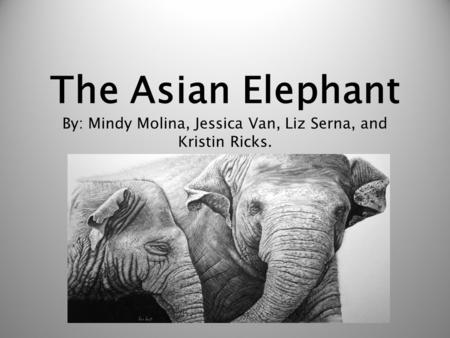 The Asian Elephant By: Mindy Molina, Jessica Van, Liz Serna, and Kristin Ricks.