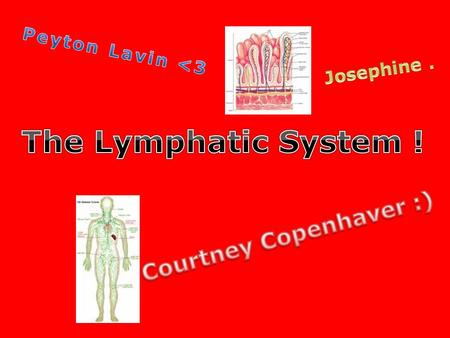 Lymphatic System Function (: 1. The function of the Lymphatic System plays a ' big part in the immune system '. The System is like a defense mechanism,