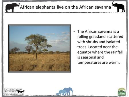 The African savanna is a rolling grassland scattered with shrubs and isolated trees. Located near the equator where the rainfall is seasonal and temperatures.