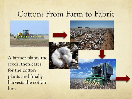 Cotton: From Farm to Fabric A farmer plants the seeds, then cares for the cotton plants and finally harvests the cotton lint.