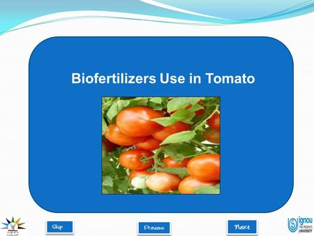 Biofertilizers Use in Tomato