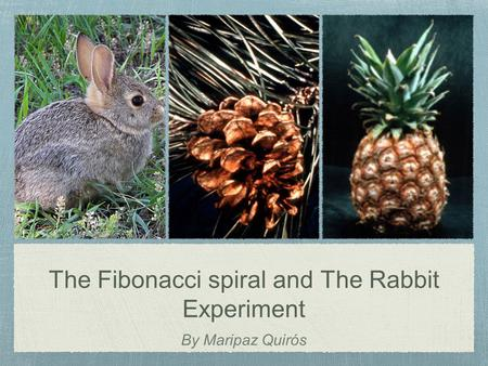 The Fibonacci spiral and The Rabbit Experiment By Maripaz Quirós.