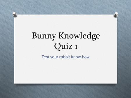 Bunny Knowledge Quiz 1 Test your rabbit know-how.