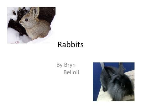 Rabbits By Bryn Belloli. Table of contents Basic Picking your pet 6 essential parts about the rabbit Breeds What they eat Rabbit grooming Glossary.