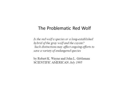 The Problematic Red Wolf Is the red wolf a species or a long-established hybrid of the gray wolf and the coyote? Such distinctions may affect ongoing efforts.
