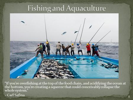 """If you're overfishing at the top of the food chain, and acidifying the ocean at the bottom, you're creating a squeeze that could conceivably collapse."