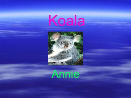 Koala Annie. Koala  Koalas live in Australia  Koalas are pouched mammals  Called bear, but not in bear family  Koalas are now found in Queensland,