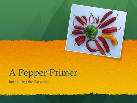 A Pepper Primer Introducing the Capsicums. A Brief History Peppers are members of the genus Capsicum. The first wild Capsicums originated in eastern Bolivia.