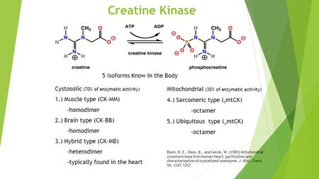 Creatine Kinase Cystosolic (70% of enzymatic activity) 1.) Muscle type (CK-MM) -homodimer 2.) Brain type (CK-BB) -homodimer 3.) Hybrid type (CK-MB) -heterodimer.