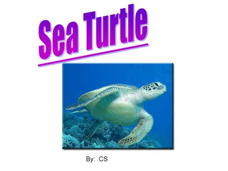 By: CS. Physical Features  Sea Turtles have their insides covered by a hard shell.  The largest Sea Turtle is eight feet long and weighs up to 1, 300.