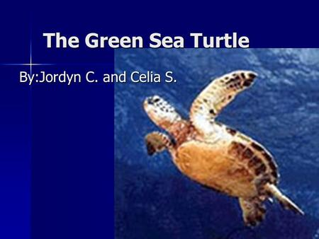 The Green Sea Turtle By:Jordyn C. and Celia S.. Habitat and food Green sea turtles need tropical and sub-tropical beaches and waters to survive. The green.