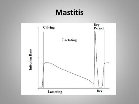 Mastitis. Mastitis Definitions Mastitis in Wisconsin.