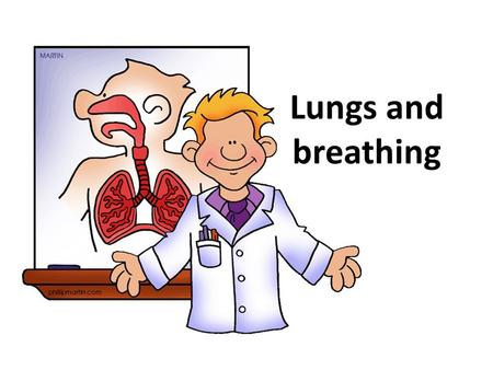 Lungs and breathing.
