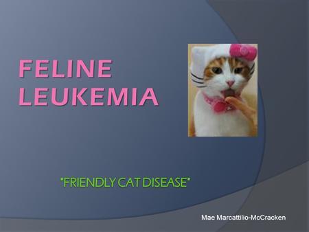 Cat diseases and symptoms list